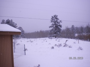 March 23 2013 Snow - Ken 2