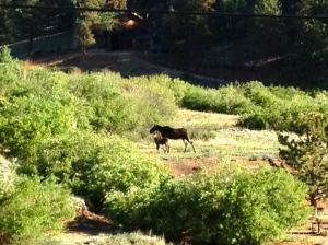 Moose1 07-07-2013