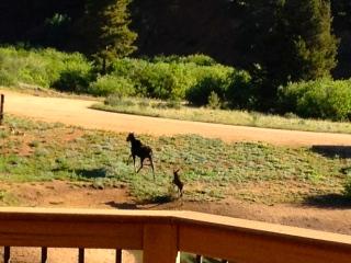 Moose2 07-07-2013