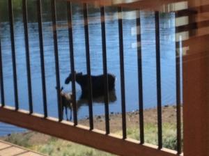 Moose4 07-07-2013
