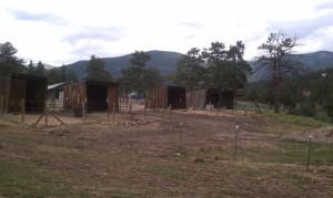 Horses 8-24-2013a