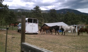 Horses 8-24-2013d