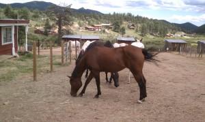 Horses 8-24-2013e
