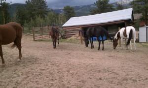 Horses 8-24-2013f