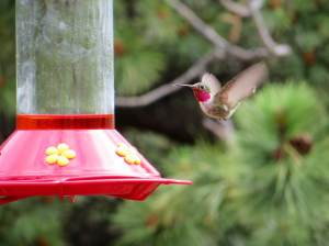 hummingbird 08-11-2013