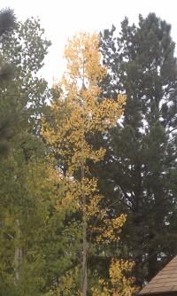 Autumn 9-22-2013b