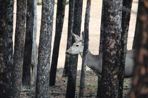Deer 09-13-2013a