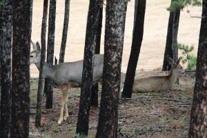 Deer 09-13-2013b