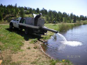 Restocking Fish Pond 06-02-2014b