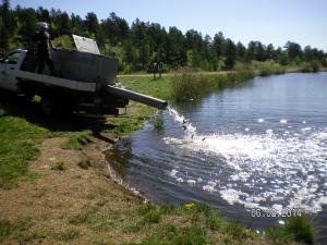 Restocking Fish Pond 06-02-2014c