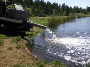 Restocking Fish Pond 06-02-2014e