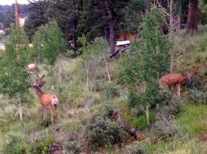 deer3 7-14-2014