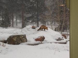 Fox2 1-27-2014