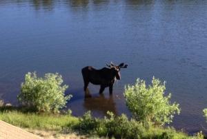 moose3 6-27-2014