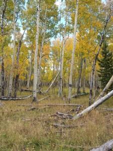 Autumn 09-28-2014m