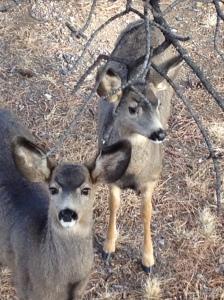 Deer 12192013b