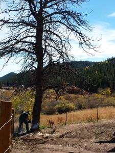 dead tree 10-11-2015b