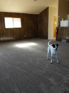 New Carpet 11142015b